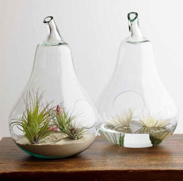 http-_ecosalon.com_glass-terrarium-giveaway