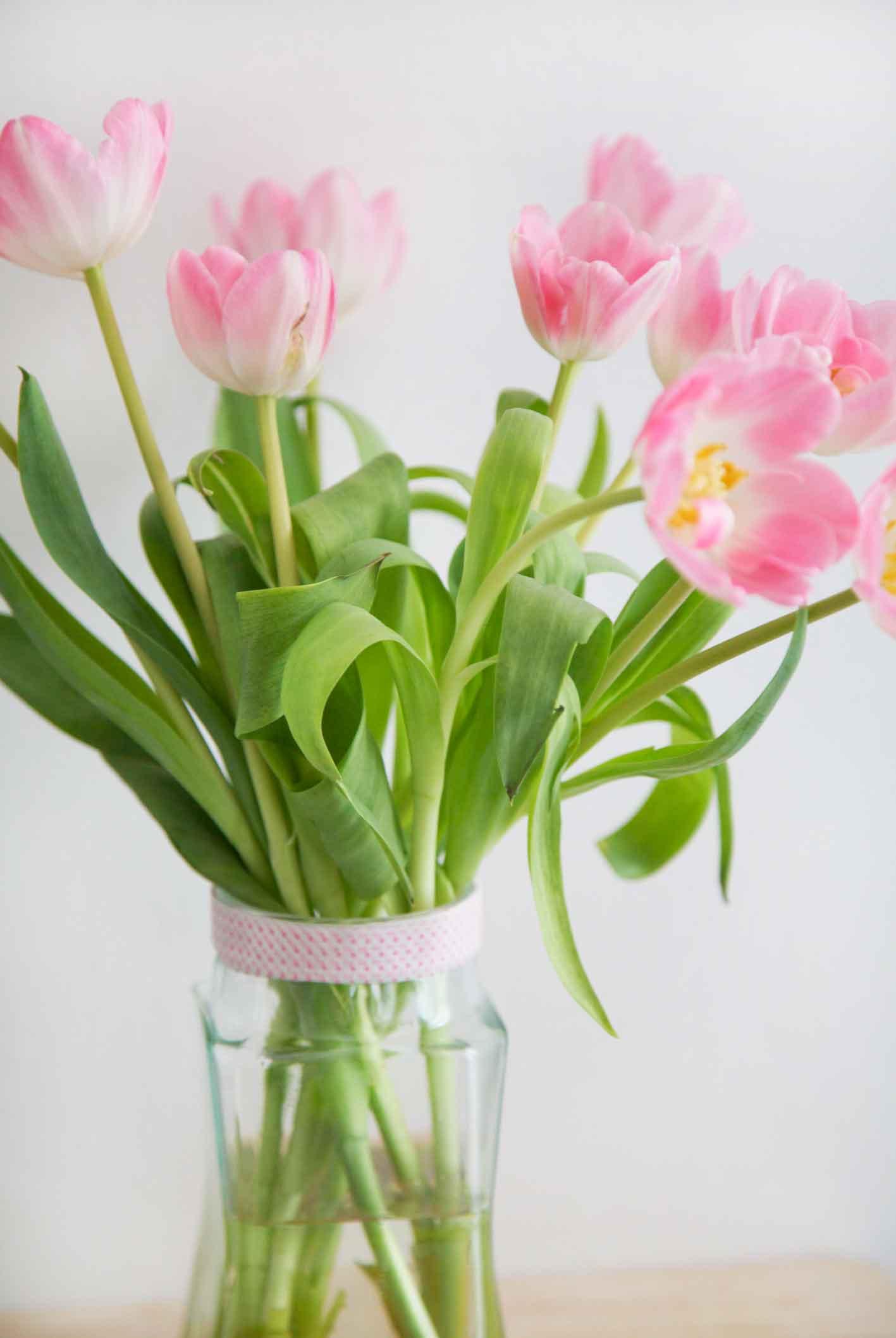 youbold-tulipe3