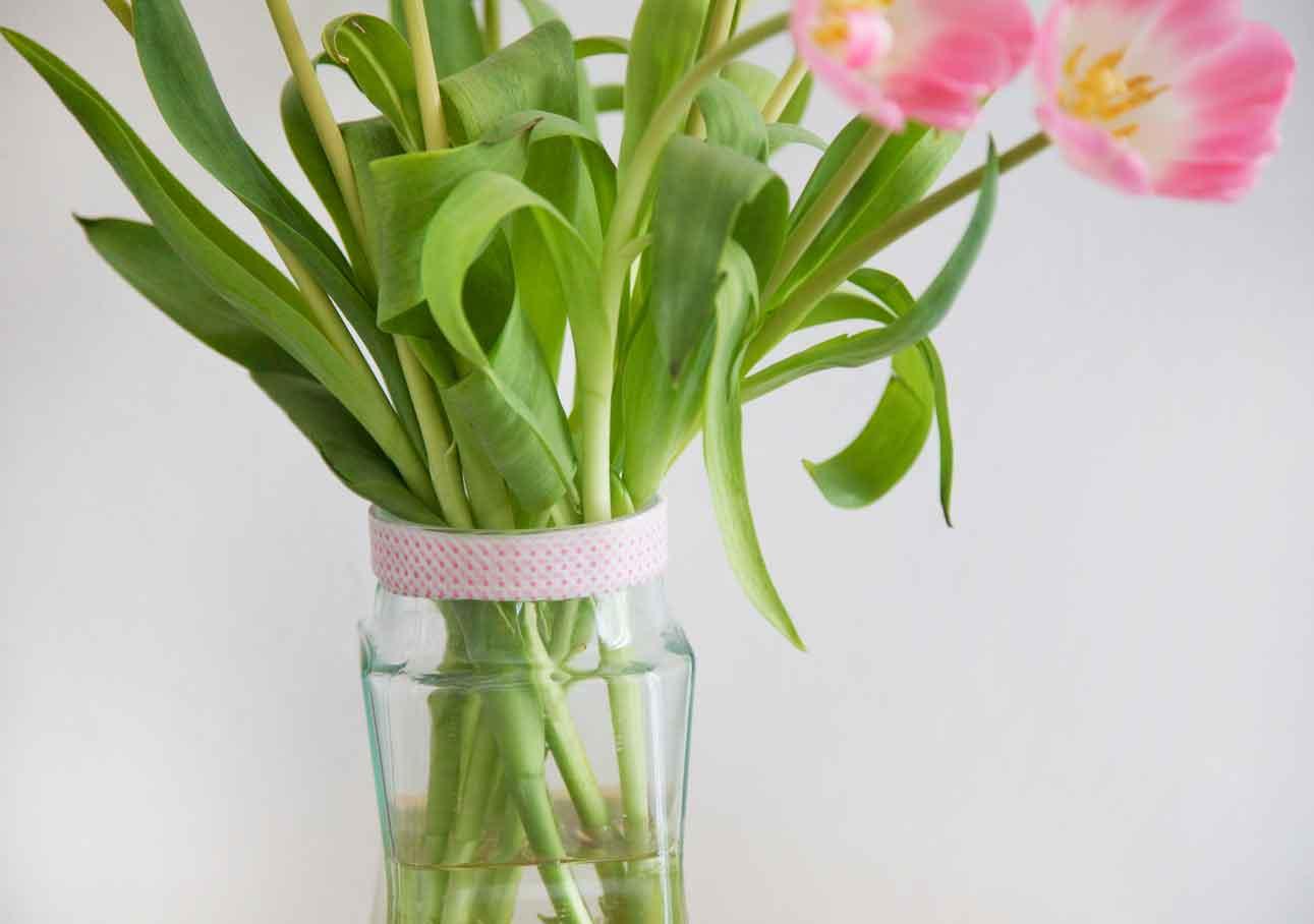 youbold-tulipe4