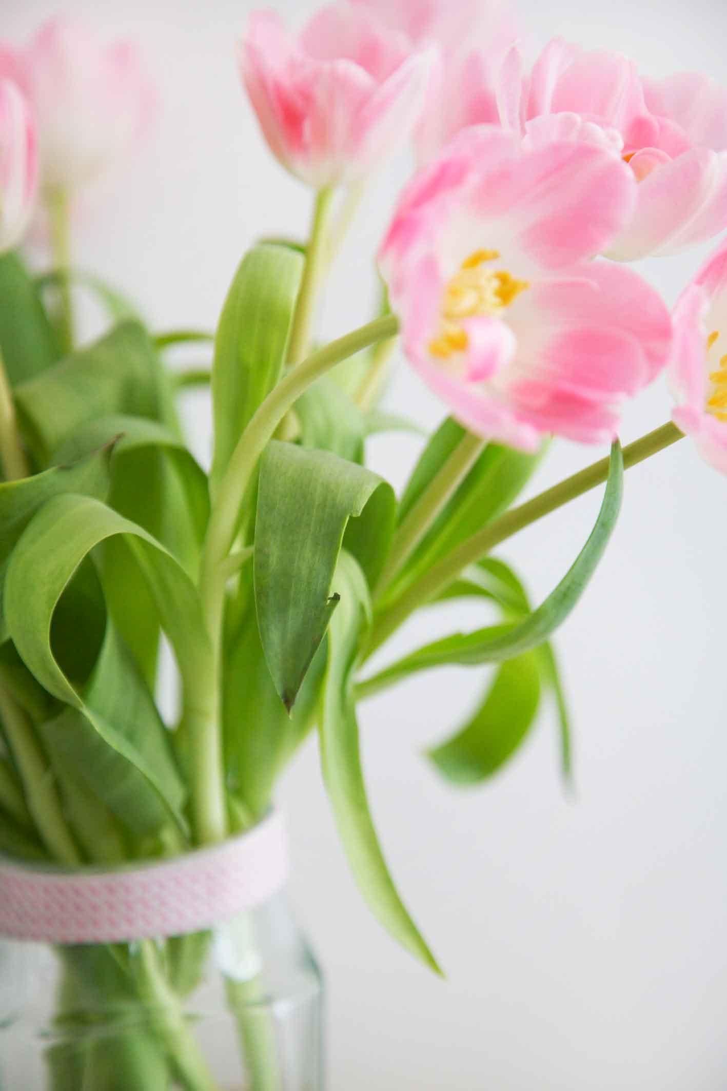youbold-tulipe8-1