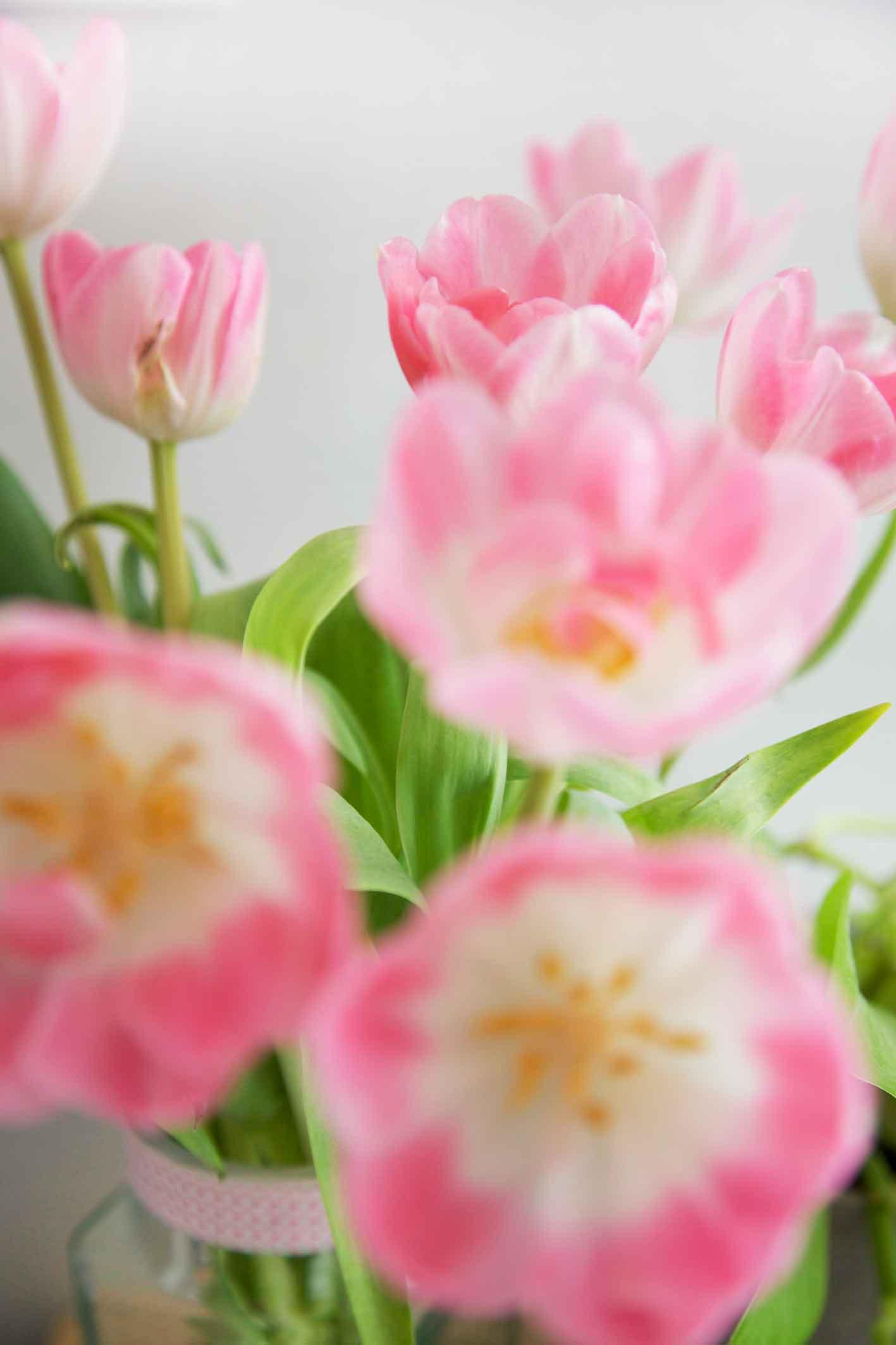 youbold-tulipe9